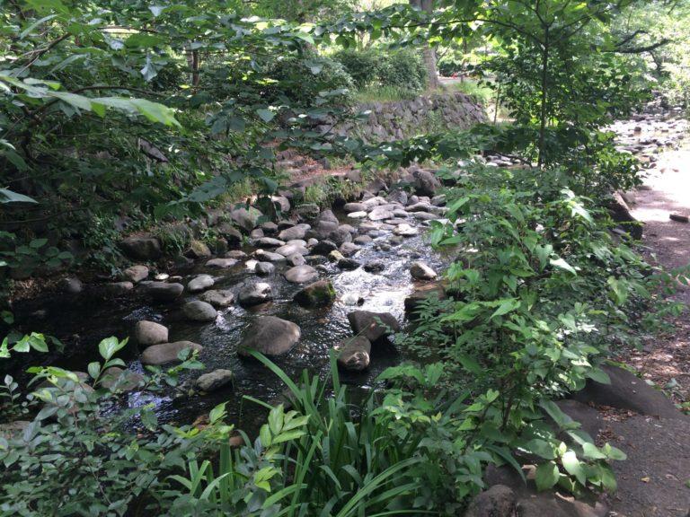 井の頭公園東へ川1