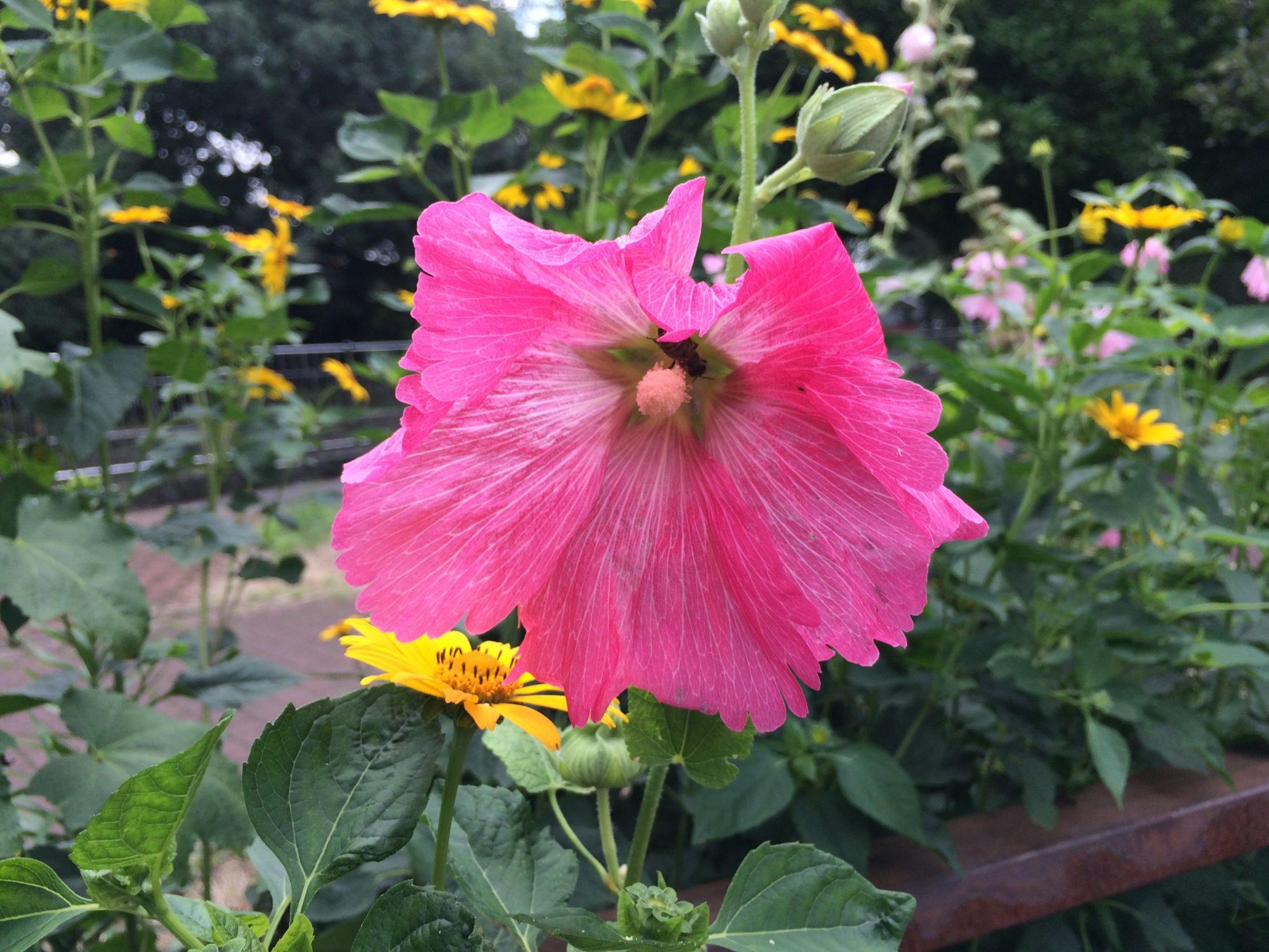 善福寺公園の花