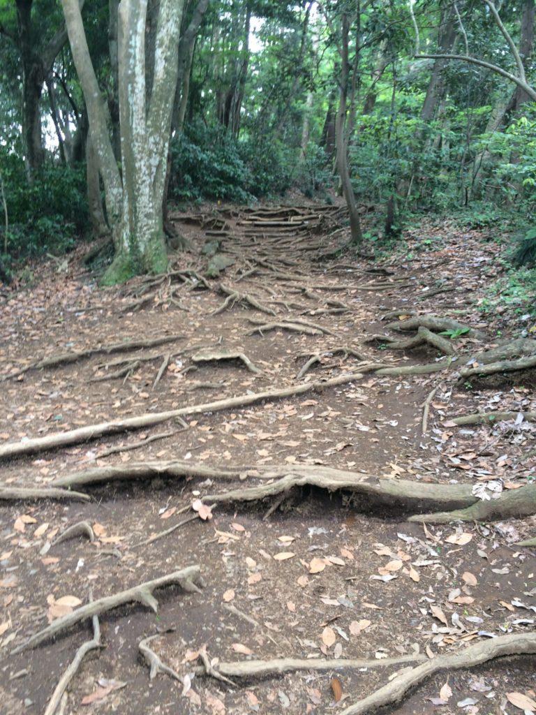 4号路木の根