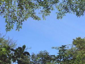 青空と木枝