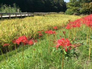 水生植物園秋