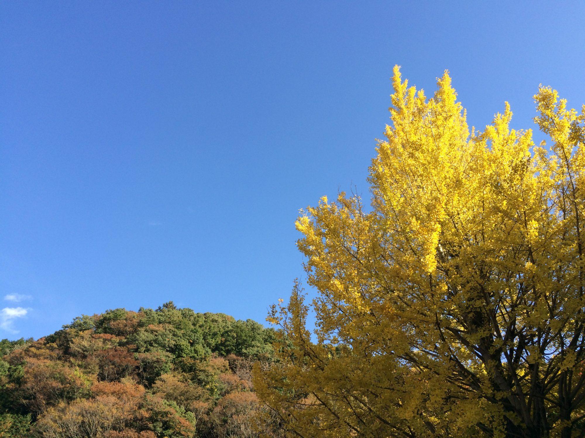 高尾山駅前