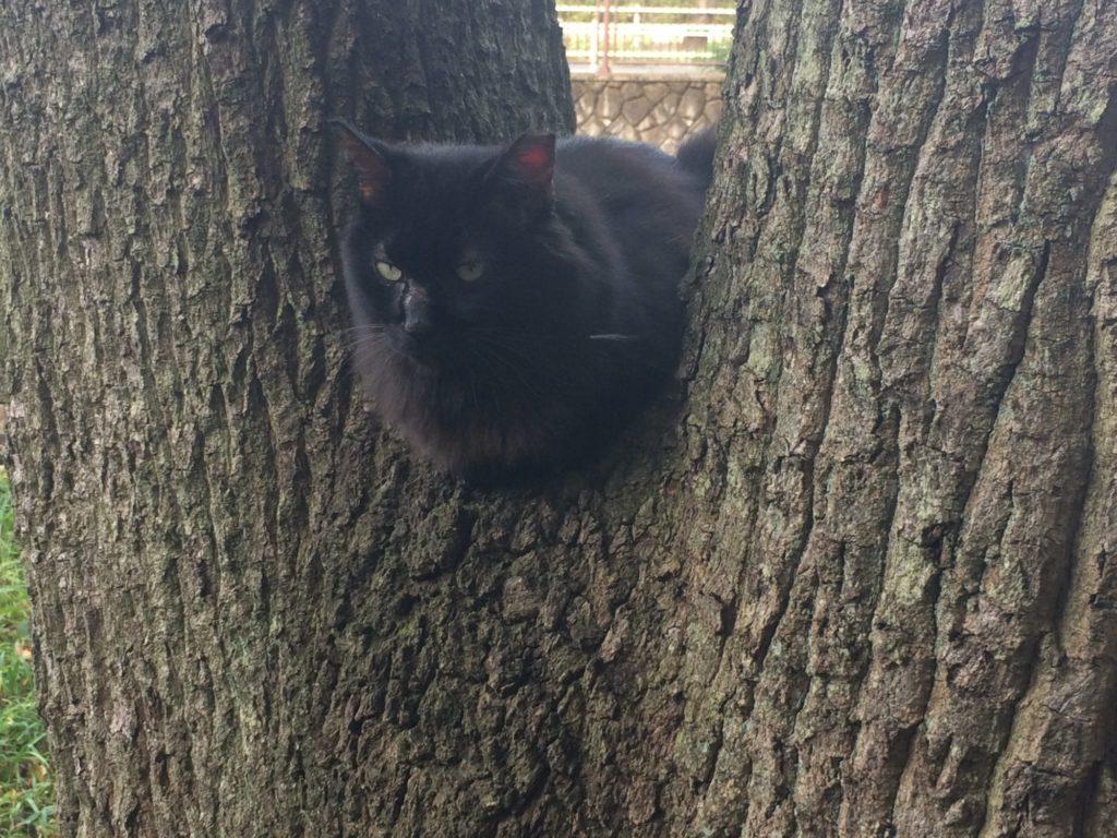 木のまた猫調整前