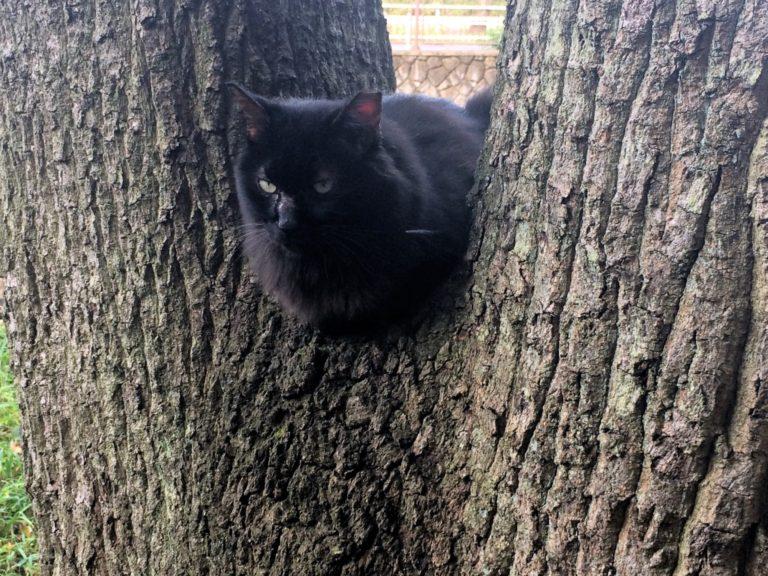 木の股に黒猫