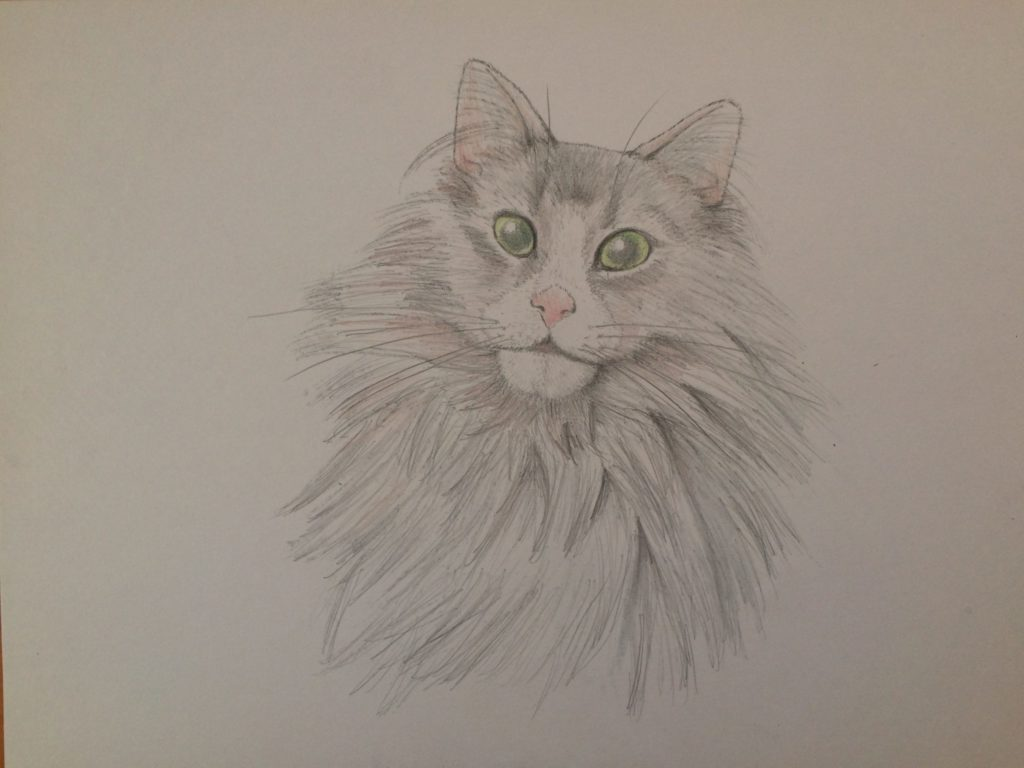 猫手描き元